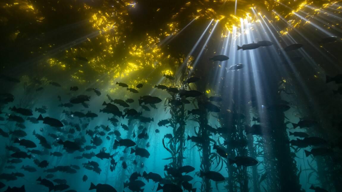 Les plus belles photos sous-marines primées en 2020 par le concours Ocean Art