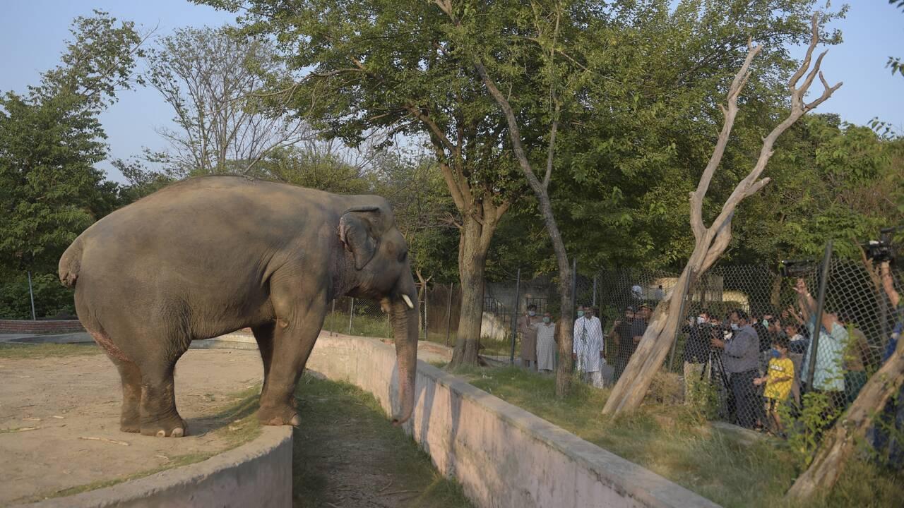 Bangladesh: Kanchi, jeune rhinocéros, recherche mâle désespérément