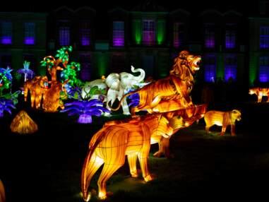 """""""Lumières sauvages"""", le festival féérique de sculptures géantes du zoo de Thoiry"""