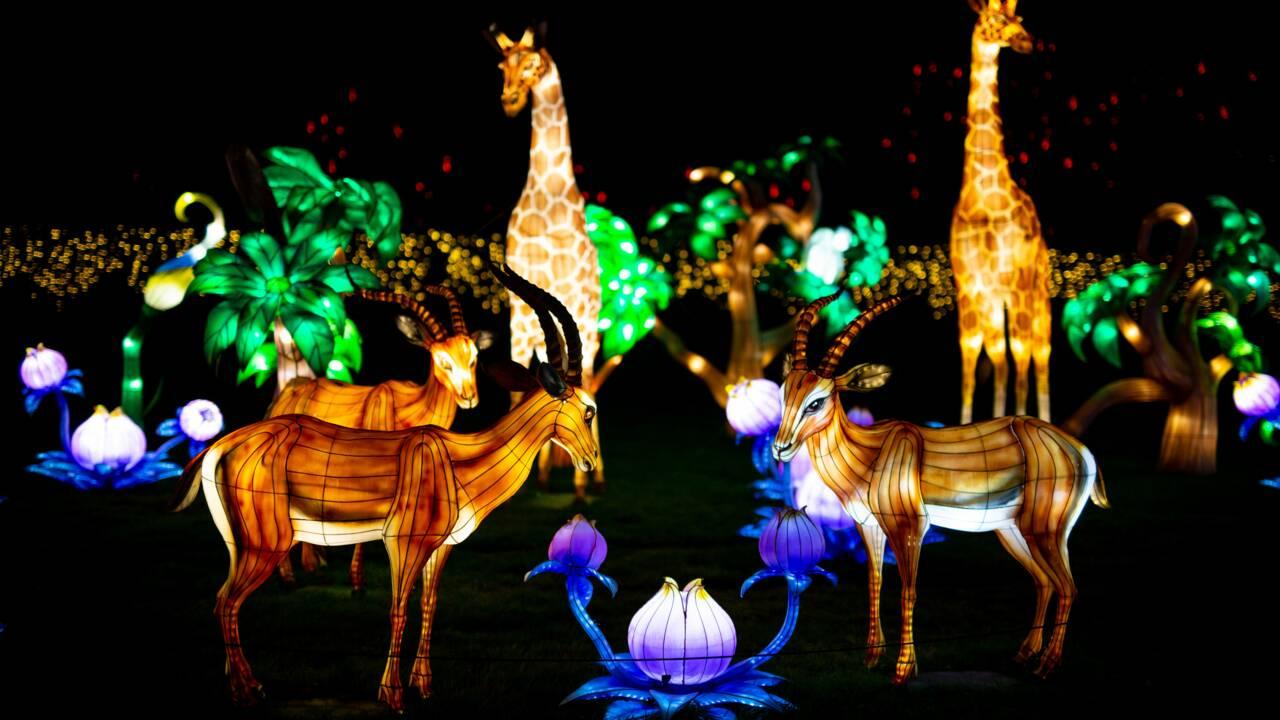 """Un festival féérique de """"lumières sauvages"""" à découvrir au zoo de Thoiry"""