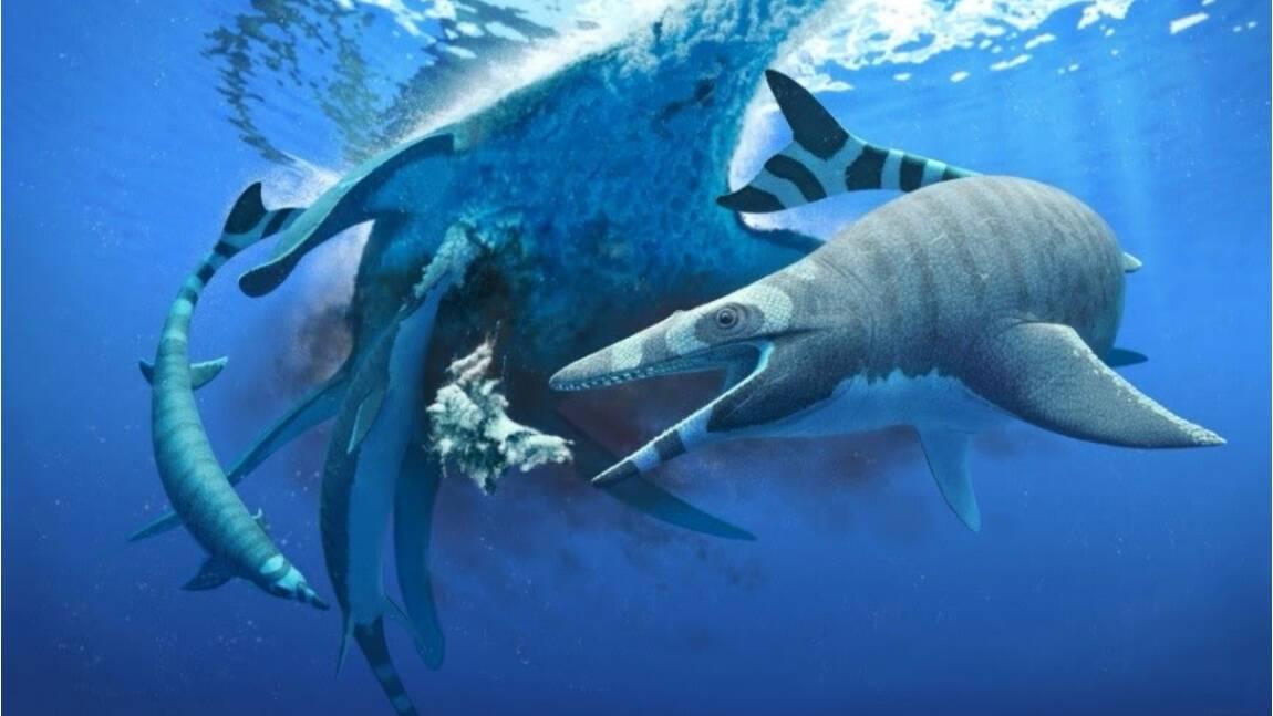 """Découverte au Maroc d'un nouveau mosasaure du Crétacé, lézard marin aux """"dents de requins"""""""