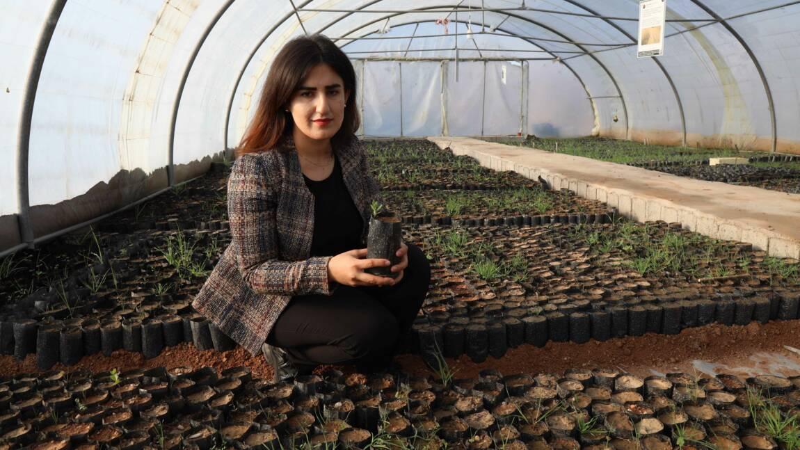 Au Kurdistan d'Irak, une forêt de chênes contre le changement climatique