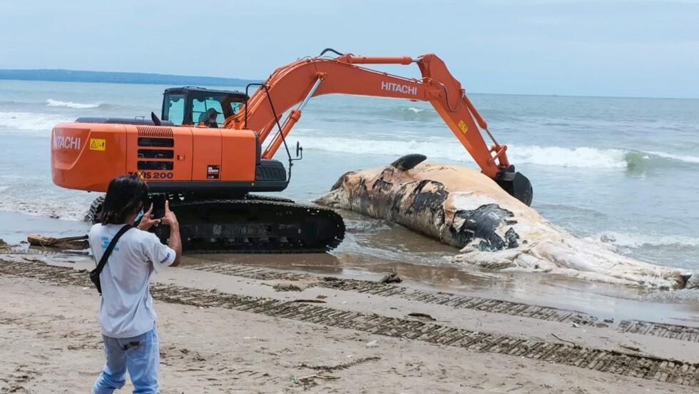 Une baleine de 14 mètres échouée sur une plage de Bali