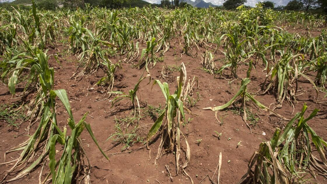 Adaptation au changement climatique: aider les petits agriculteurs d'abord pour éviter les famines
