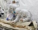 A Arras, le mystérieux sarcophage mis au jour l'an passé commence à livrer ses secrets