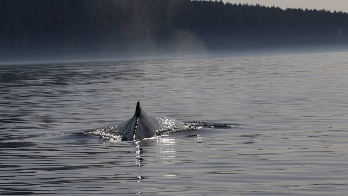 Mexique : les baleines à voir en Basse-Californie, un aquarium grandeur nature