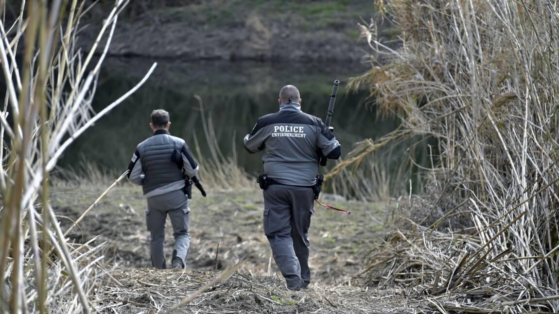 Des loups s'échappent d'un parc animalier des Pyrénées-Orientales: deux  abattus, deux introuvables