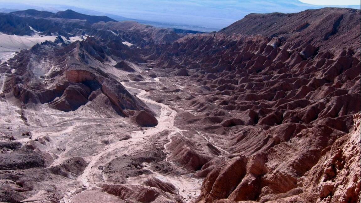 Le guano, engrais miracle utilisé par les anciennes civilisations sud-américaines dans le désert d'Atacama