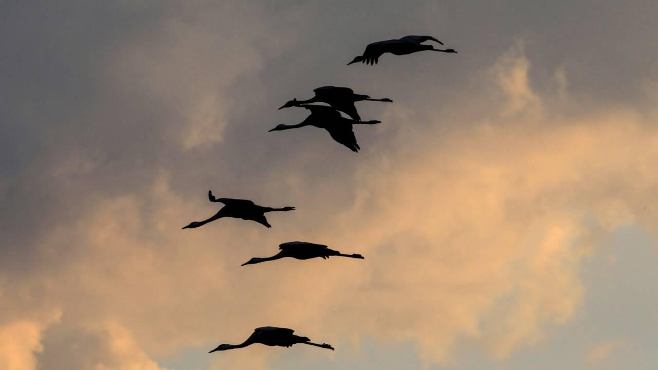 L'activité humaine menace la survie des espèces sauvages, selon une étude