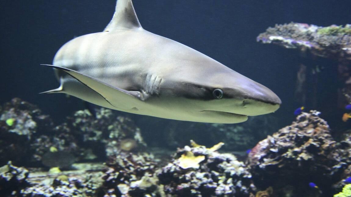 Nouvelle-Zélande : un plongeur se fait attaquer par un requin et filme la scène