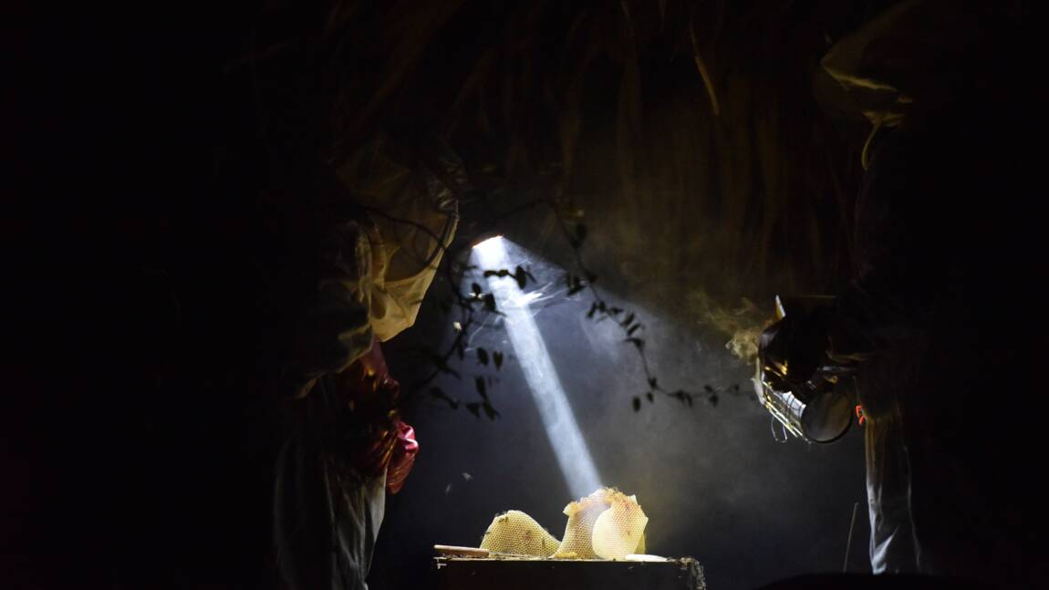 Le miel et les abeilles, nouvel or de la Côte d'Ivoire