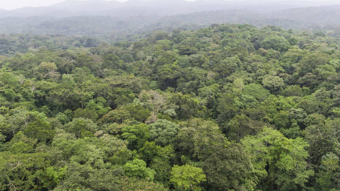 Les forêts mondiales absorbent-elles ou émettent-elles du CO2 ? Une étude fait le point