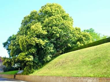 Arbre européen de l'année 2021 : votez pour vos arbres préférés parmi les 14 nommés