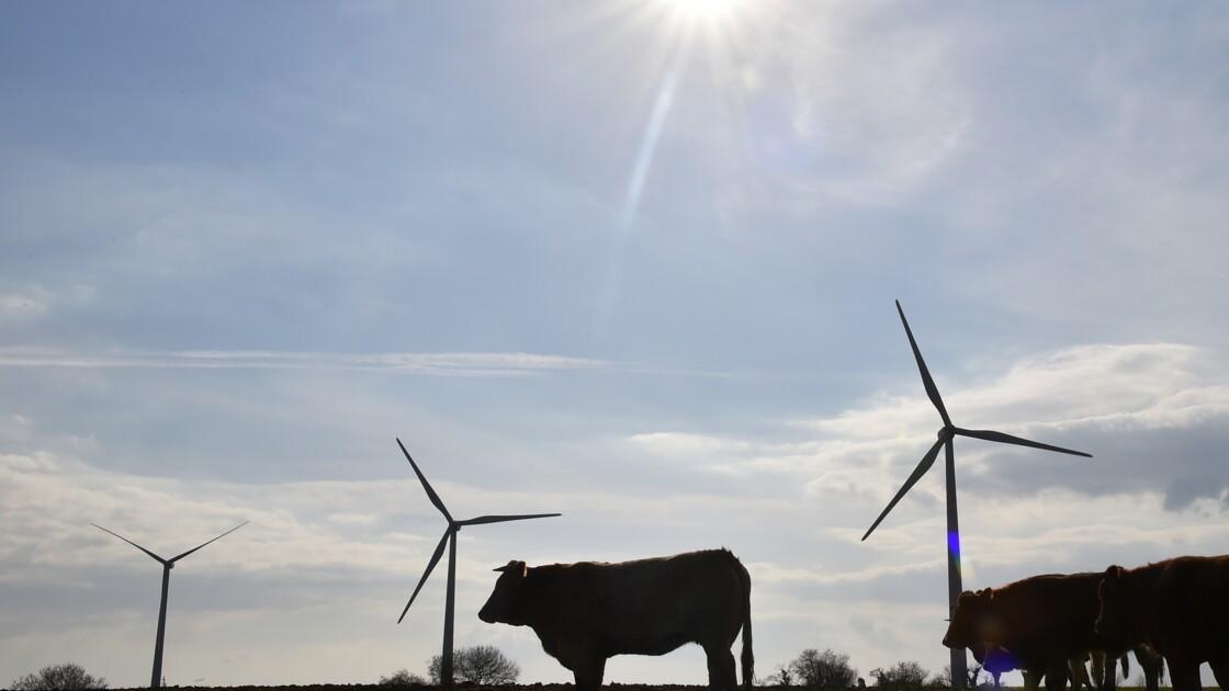 Éoliennes de Nozay: dépôt d'un référé réclamant l'arrêt provisoire du parc