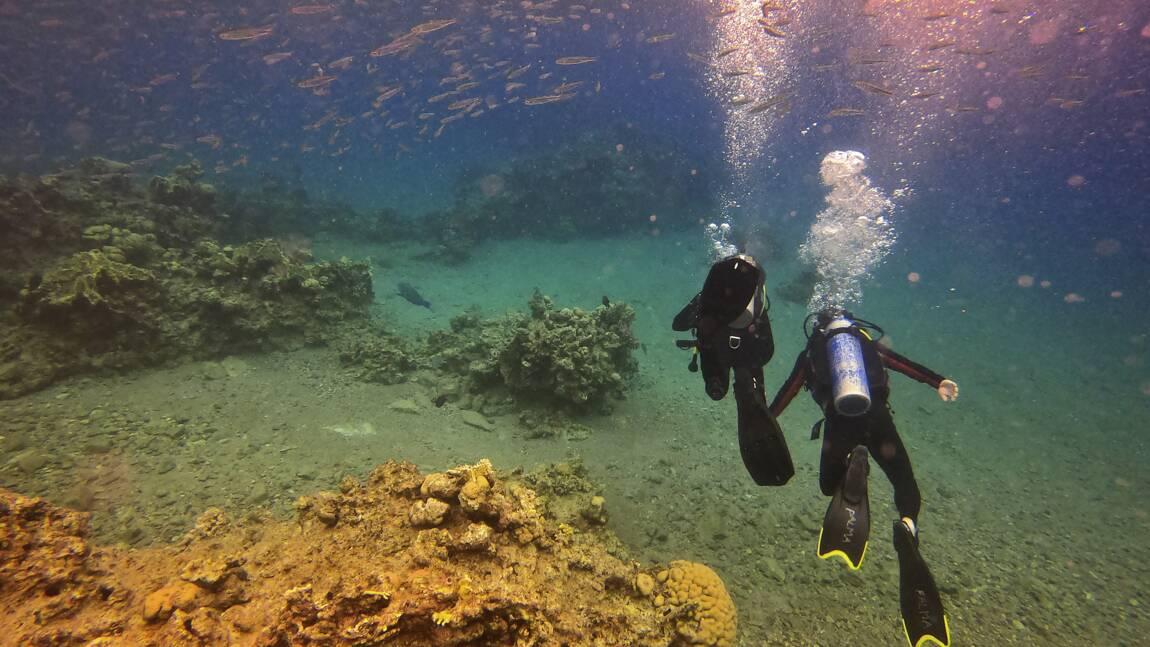 En Israël, des coraux menacés par un accord pétrolier avec les Emirats