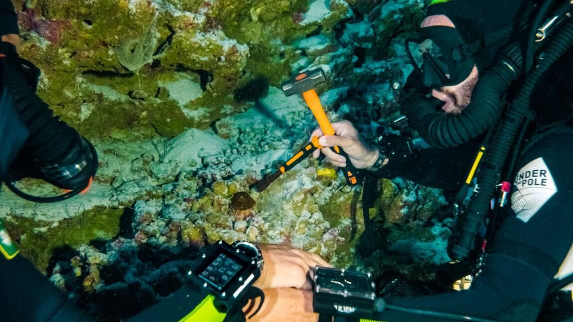 Des observations record à 172 mètres de fond éclairent comment le corail des ténèbres survit sans lumière