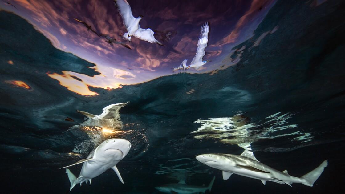Les magnifiques photos sous-marines primées par l'Underwater Photographer of the Year 2021