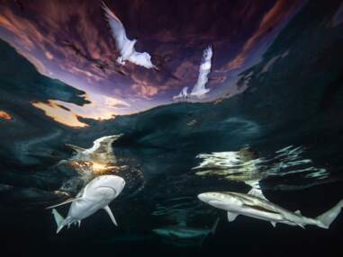 Underwater Photographer of the Year : les plus belles photos sous-marines de 2021