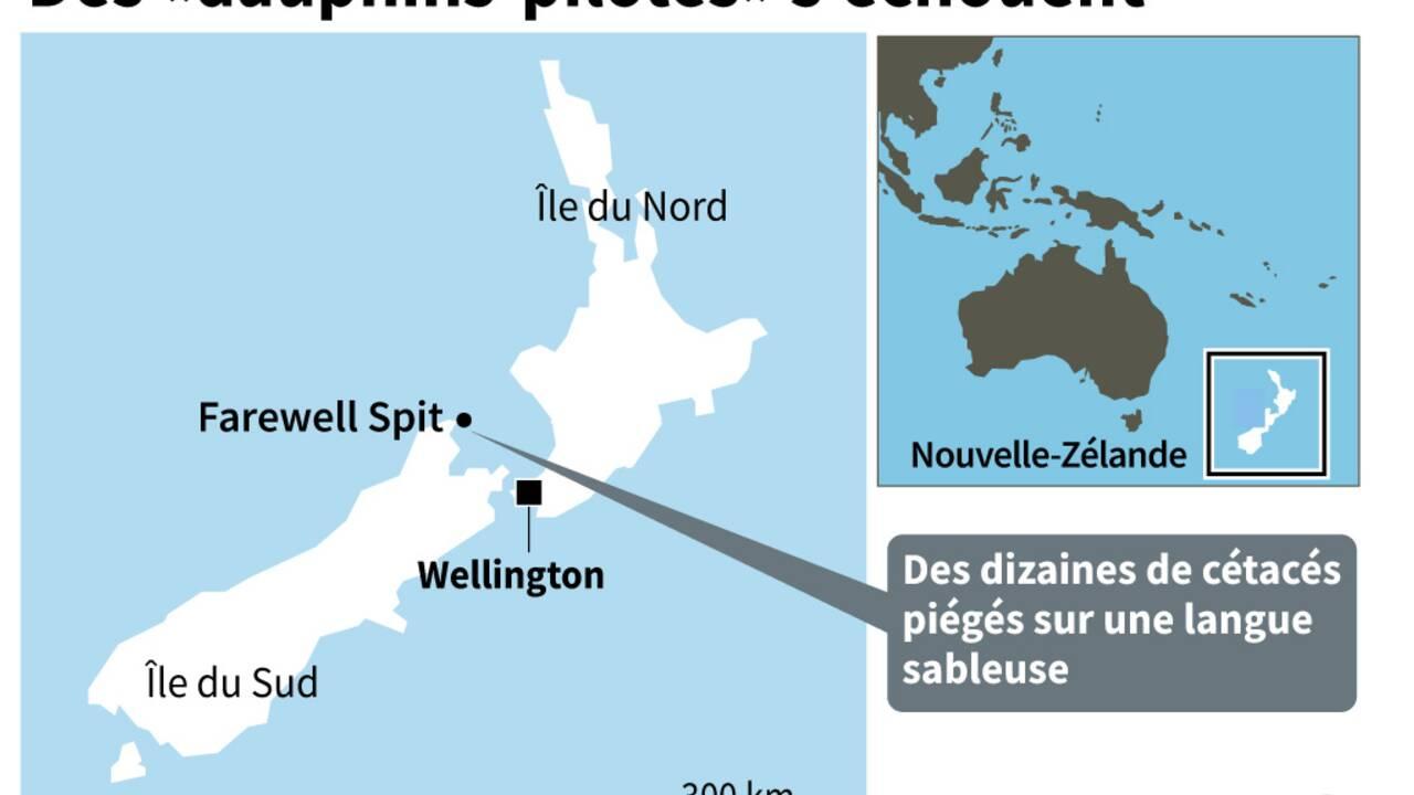Une vingtaine de globicéphales échoués remis à flot en Nouvelle-Zélande