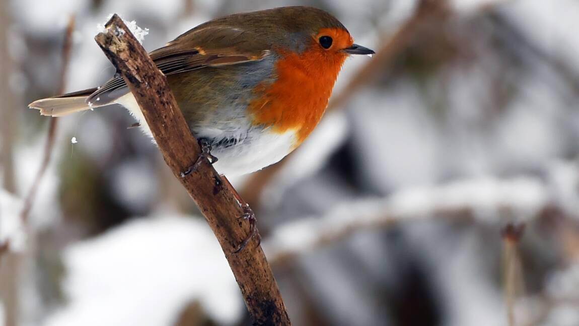 France: prison ferme pour un braconnier d'oiseaux protégés