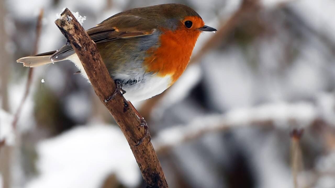 Un braconnier d'oiseaux protégés condamné à un an de prison ferme à Toulon