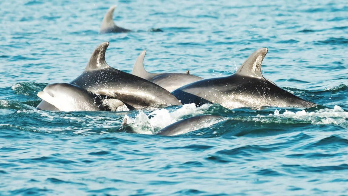 Une centaine de dauphins retrouvés morts près du Mozambique