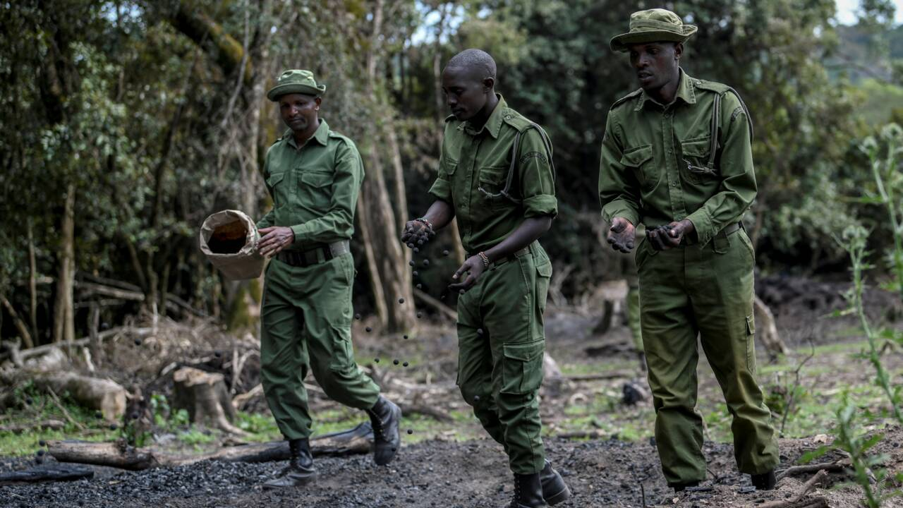 """Des """"bombes à graines"""" contre la déforestation au Kenya"""