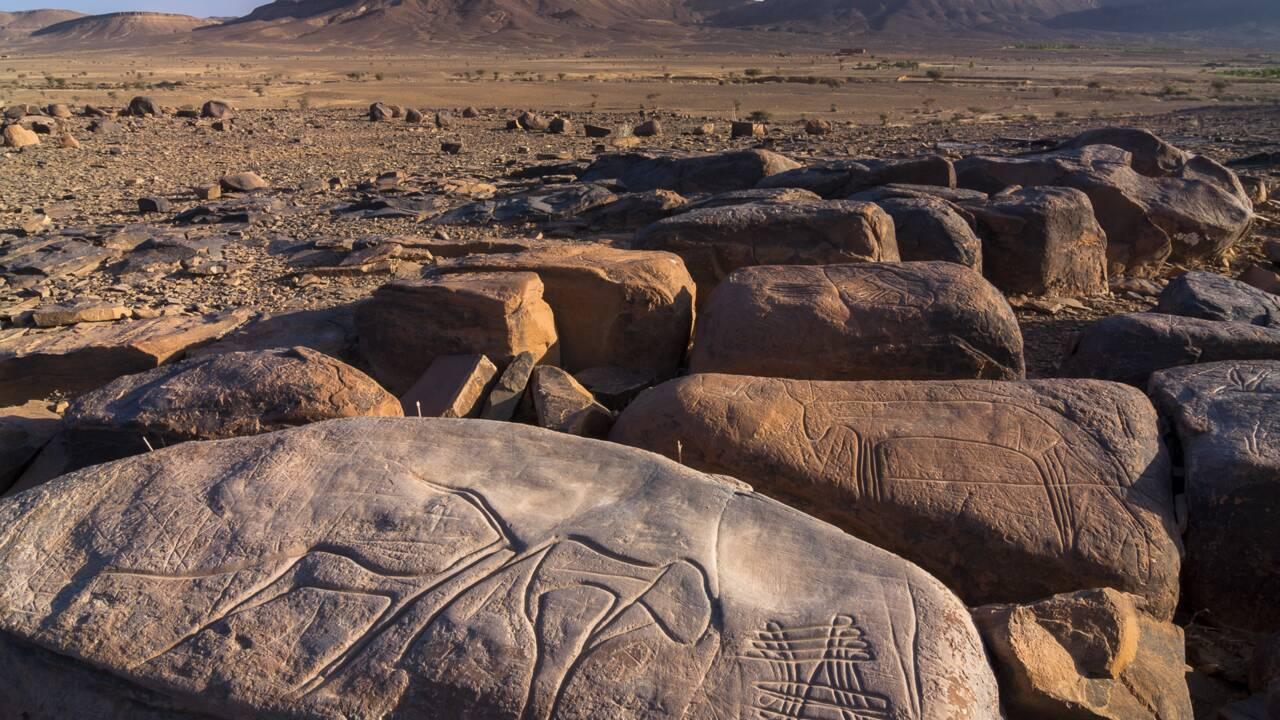 Quand girafes et éléphants broutaient dans un luxuriant Sahara vert
