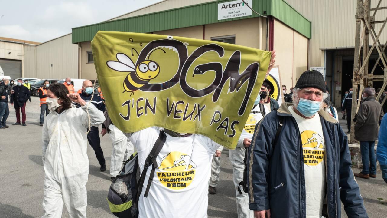 """Des """"faucheurs"""" d'OGM détruisent des centaines de sacs de semences dans l'Aude"""