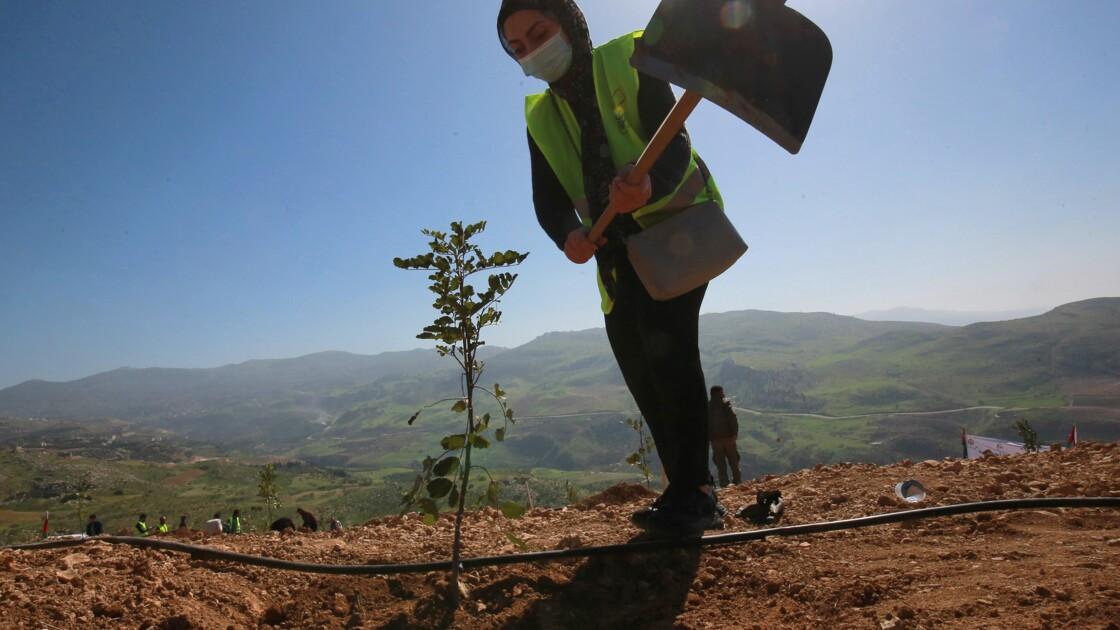 Pays désertique, la Jordanie veut planter 10 millions d'arbres en dix ans pour créer de nouvelles forêts