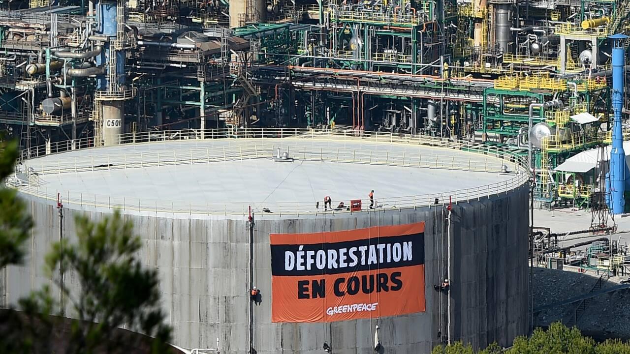Huile de palme : demande d'étude écologique poussée pour une raffinerie de Total