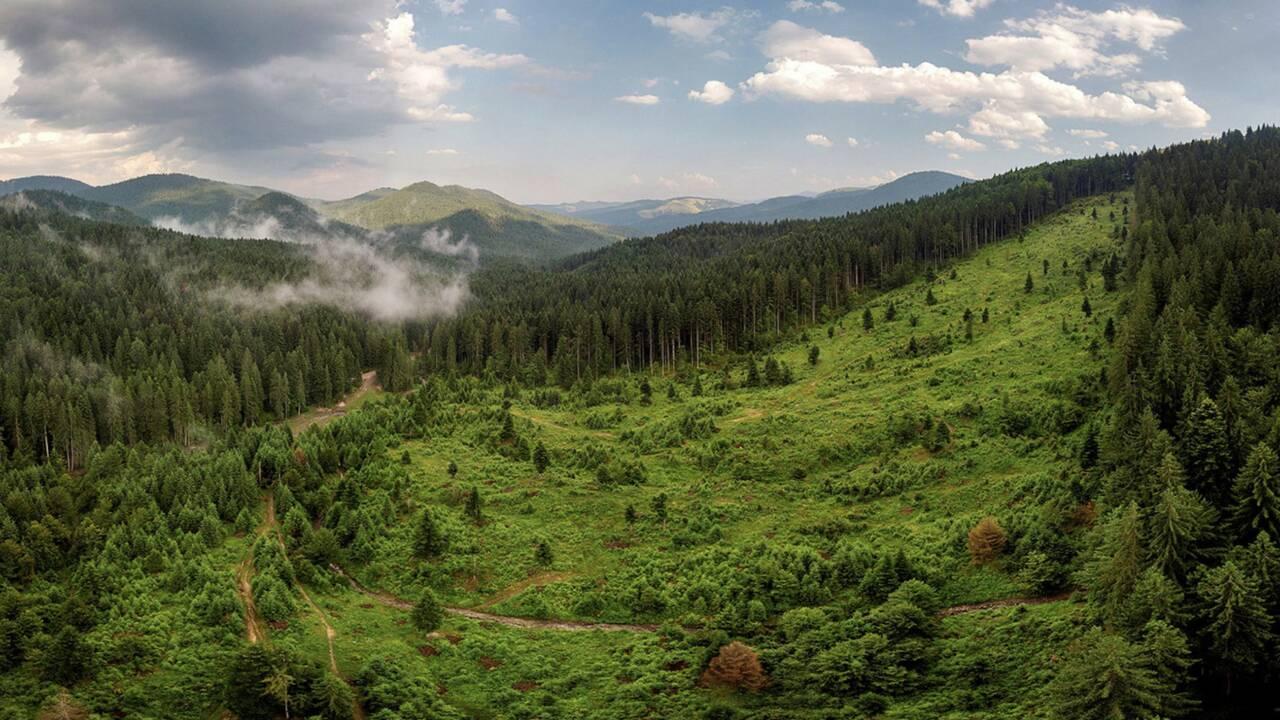 Dans les Carpates roumaines, la high-tech veille sur les forêts