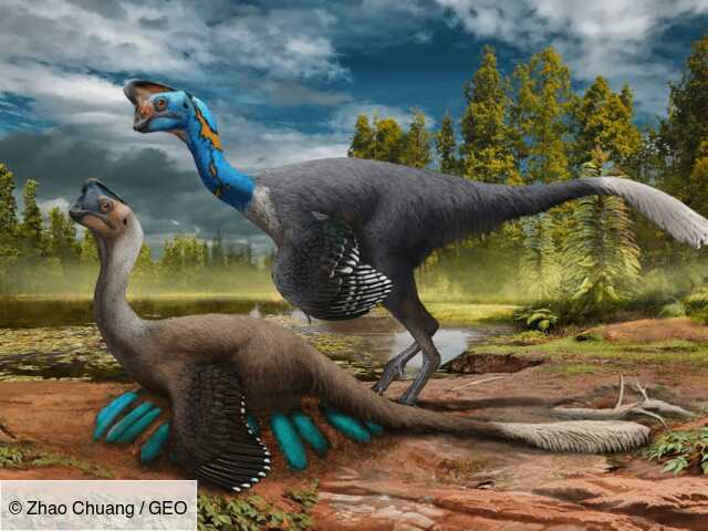 Chine : découverte d'un fossile exceptionnel de dinosaure assis sur son nid rempli d'œufs - GEO