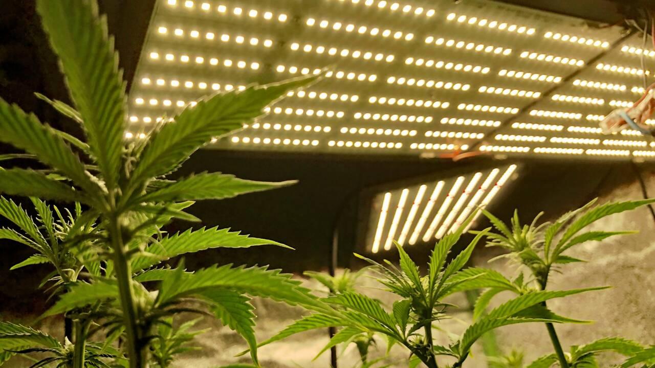 La culture du cannabis, une source croissante d'émissions de carbone aux Etats-Unis