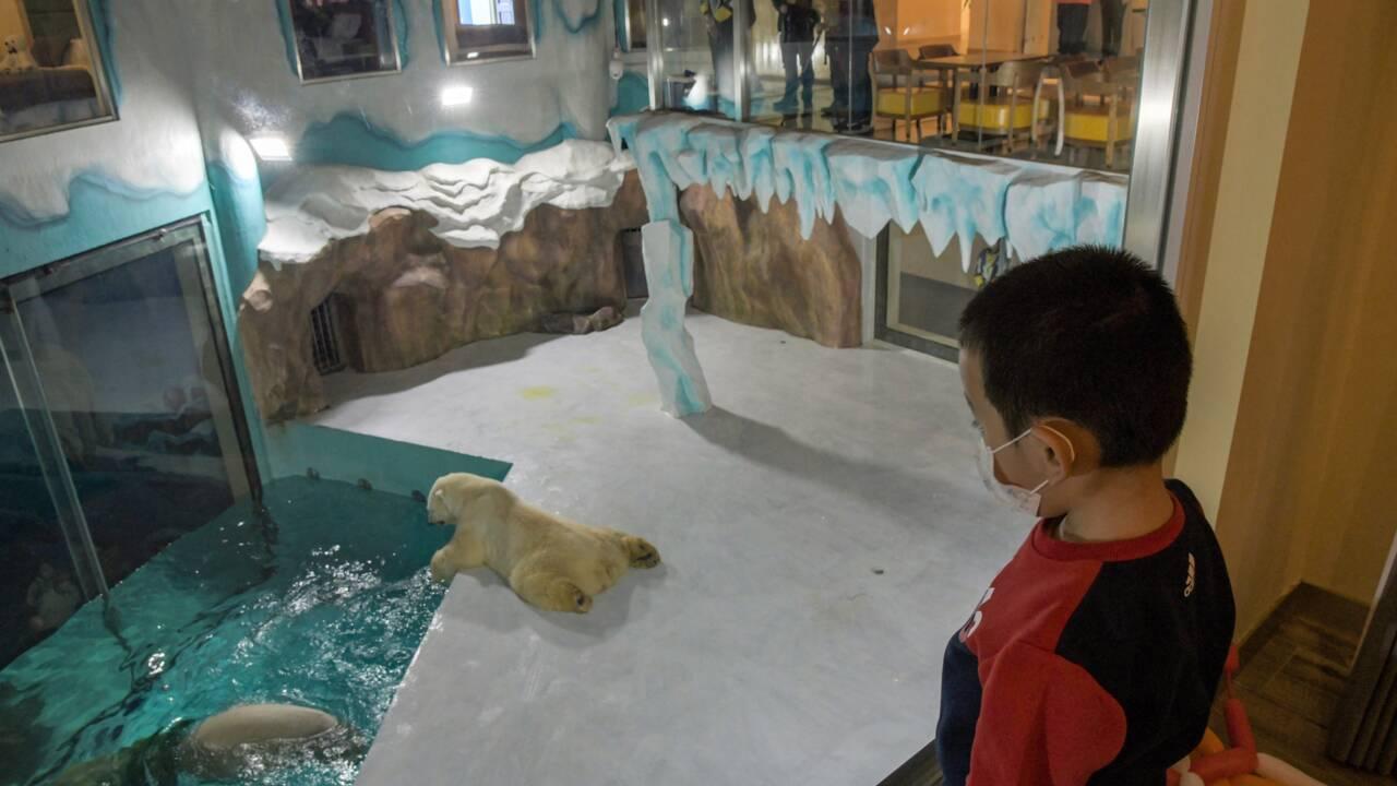 Un hôtel exhibe des ours polaires et provoque la polémique en Chine