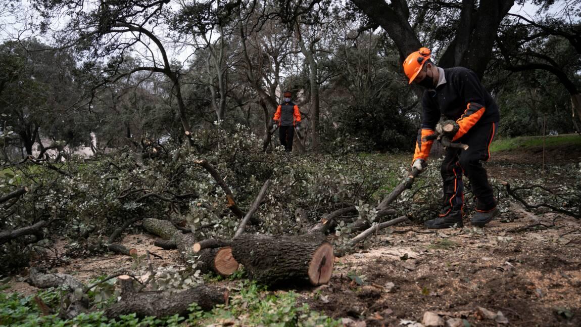 Madrid face au problème environnemental de ses arbres dévastés par la neige