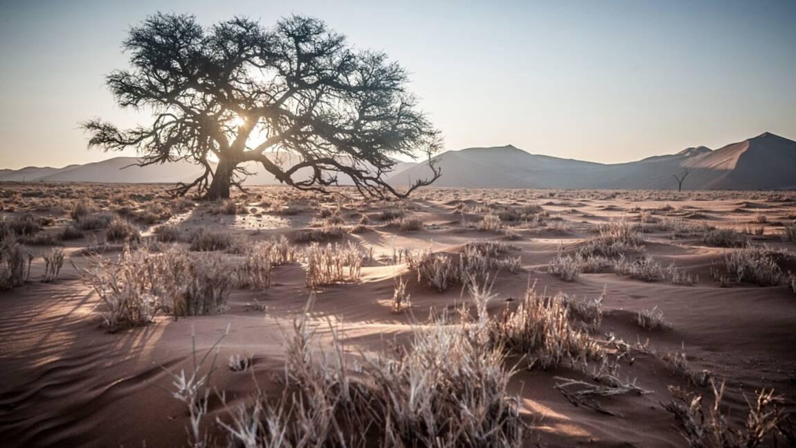 Comment des milliards d'arbres isolés font vivre les déserts d'Afrique