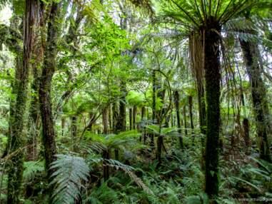 Nouvelle-Zélande : un vertige de nature