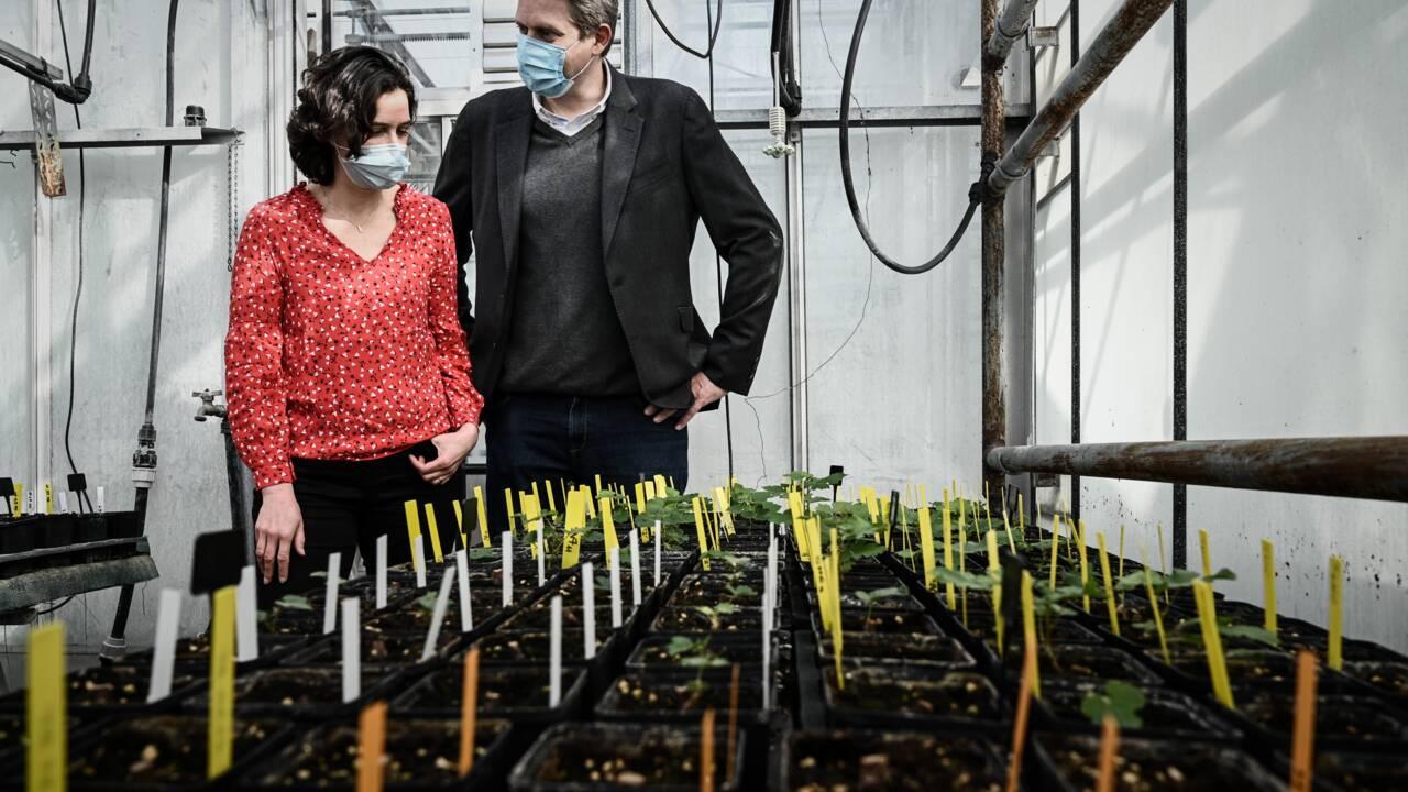 """Du Petrus et des plants de vigne envoyés dans l'espace pour tester leur """"résilience"""""""