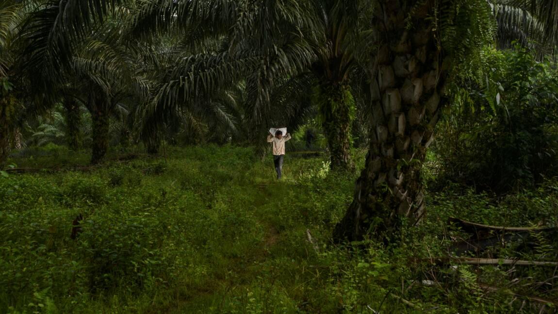L'appétit des pays riches, moteur de la déforestation des tropiques