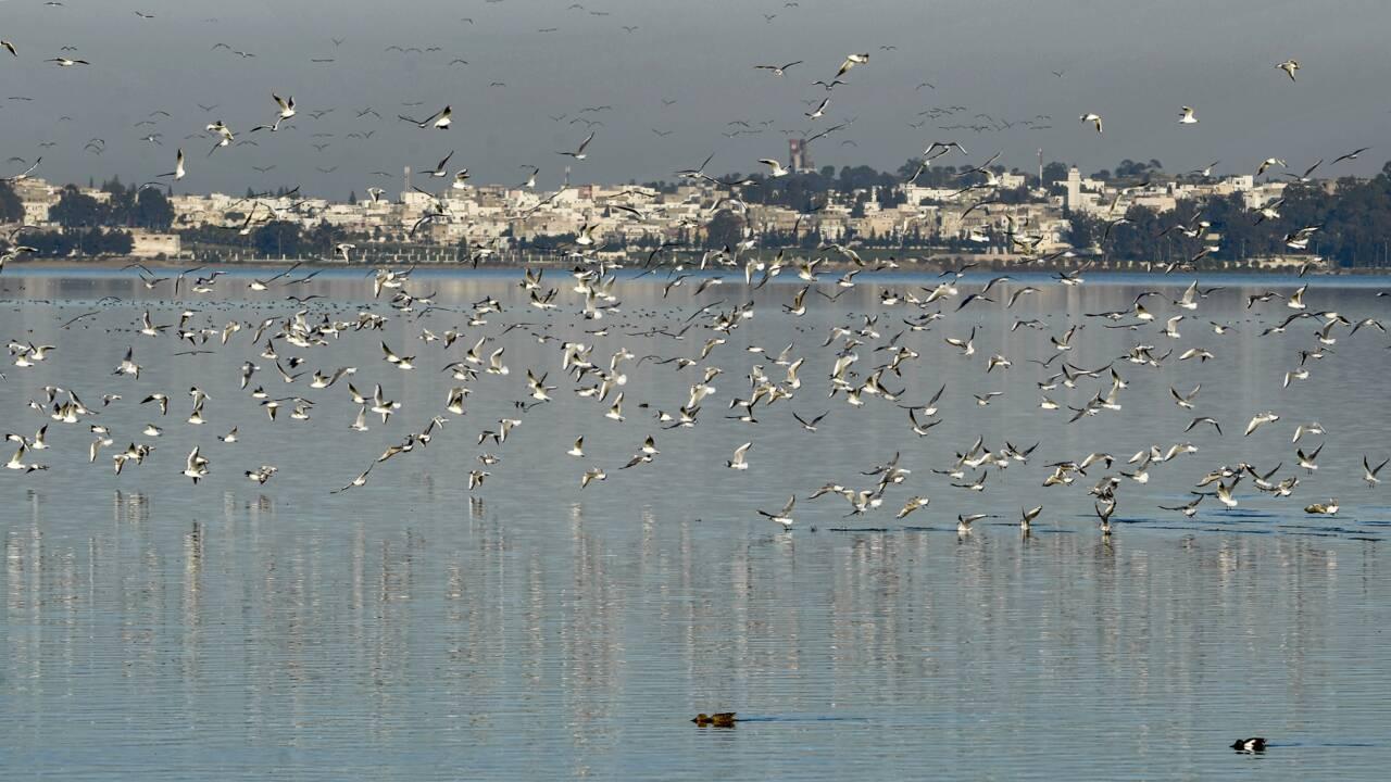 Au coeur de Tunis, la lagune, ses flamants roses... et ses poubelles