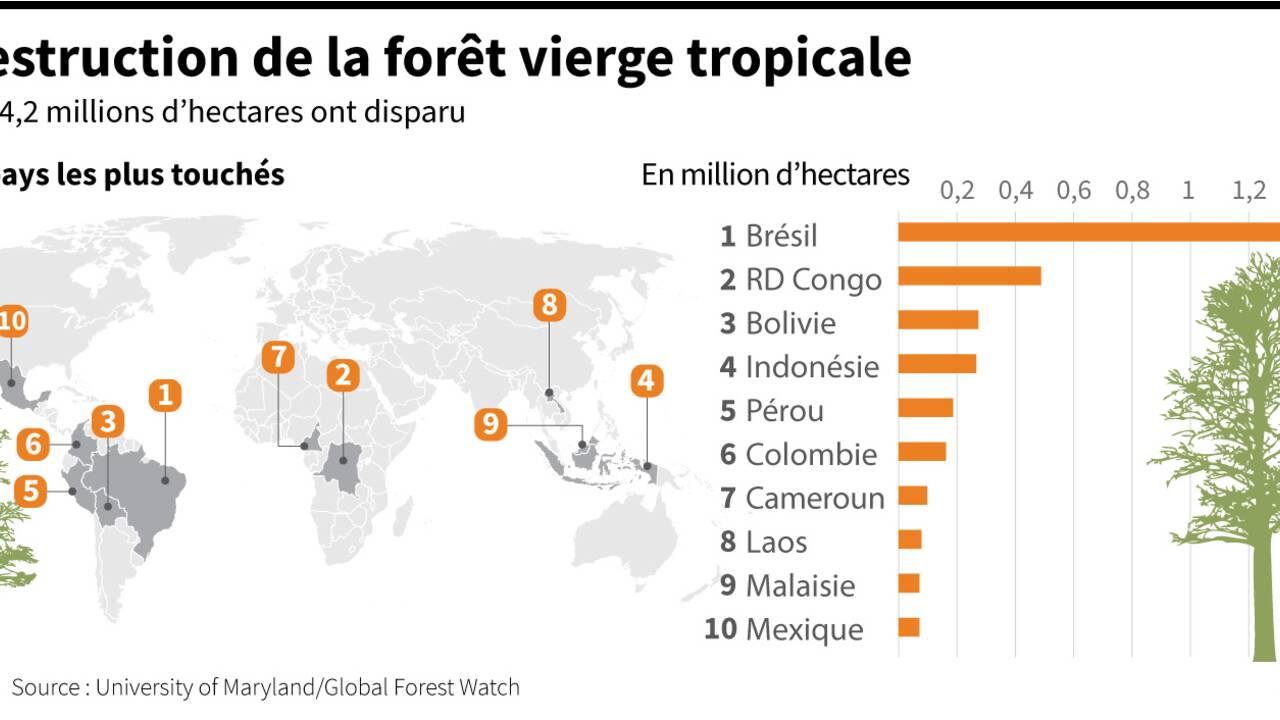 La forêt amazonienne brésilienne désormais émettrice nette de carbone