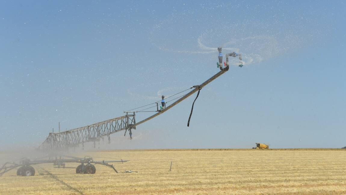 Triplement des pertes de récoltes liées aux sécheresses en Europe en 50 ans