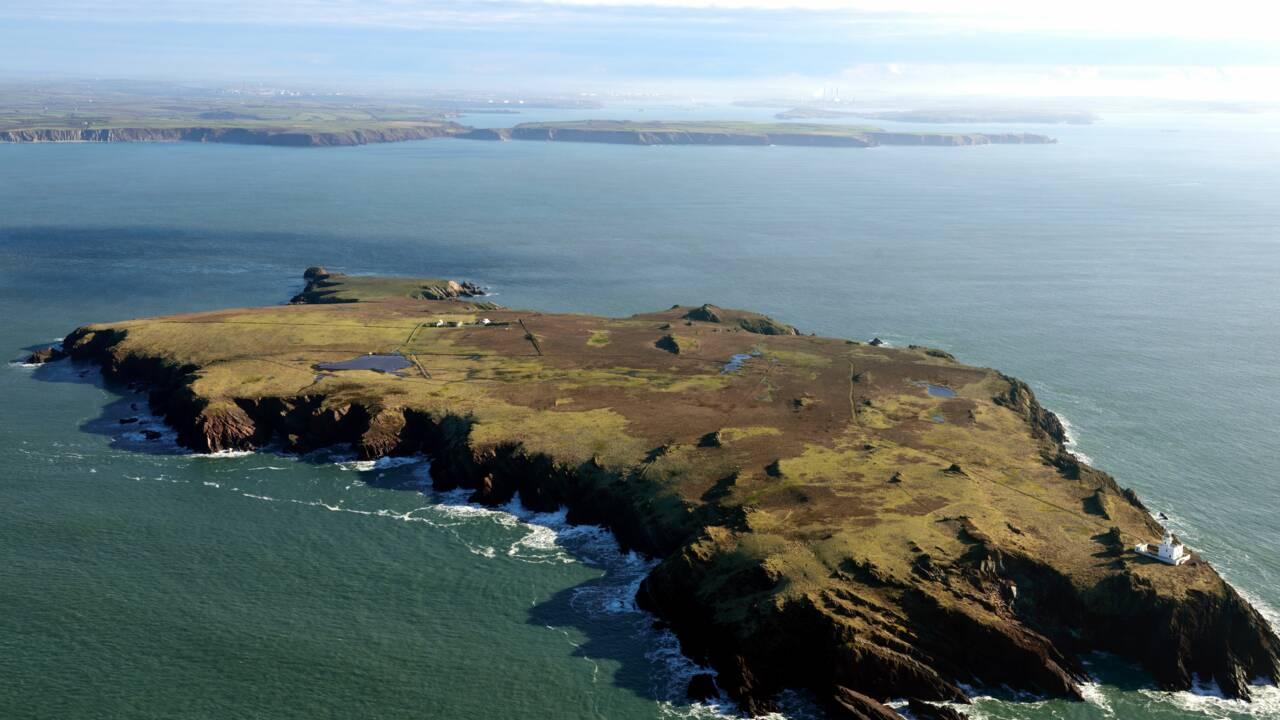 Des lapins déterrent des objets vieux de milliers d'années sur une île galloise