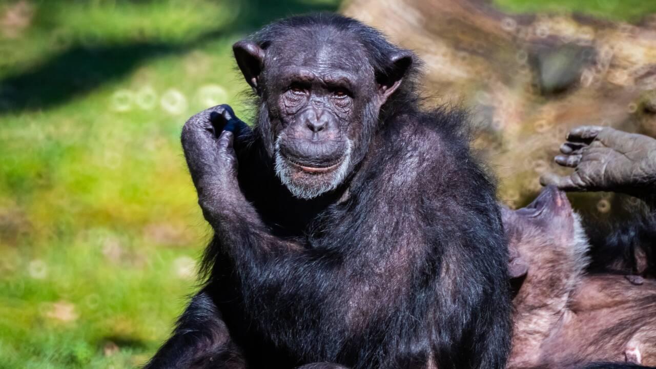Selon une étude, les animaux ont leurs propres culture et traditions