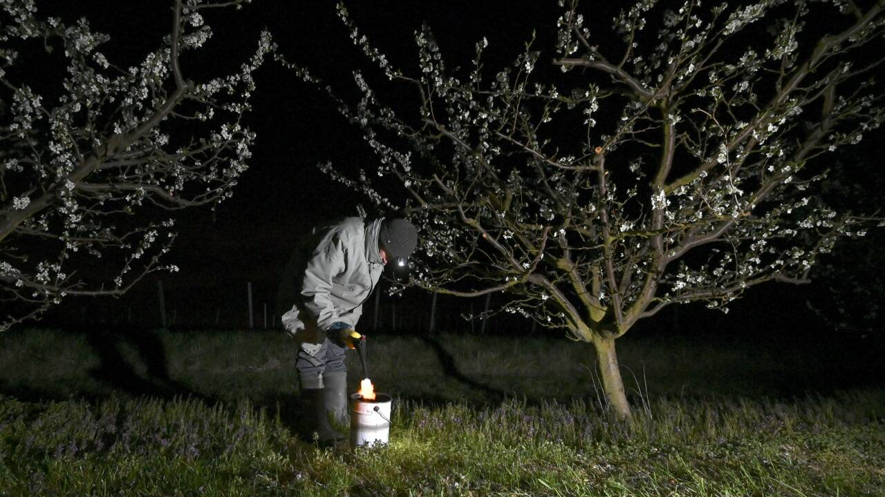"""En Alsace, des """"bougies"""" pour préserver les vergers du gel"""