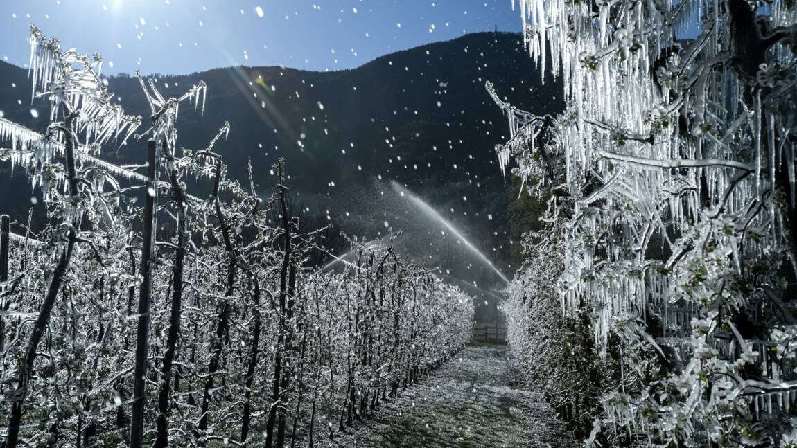 Italie: la glace pour combattre le gel tuant les plantes