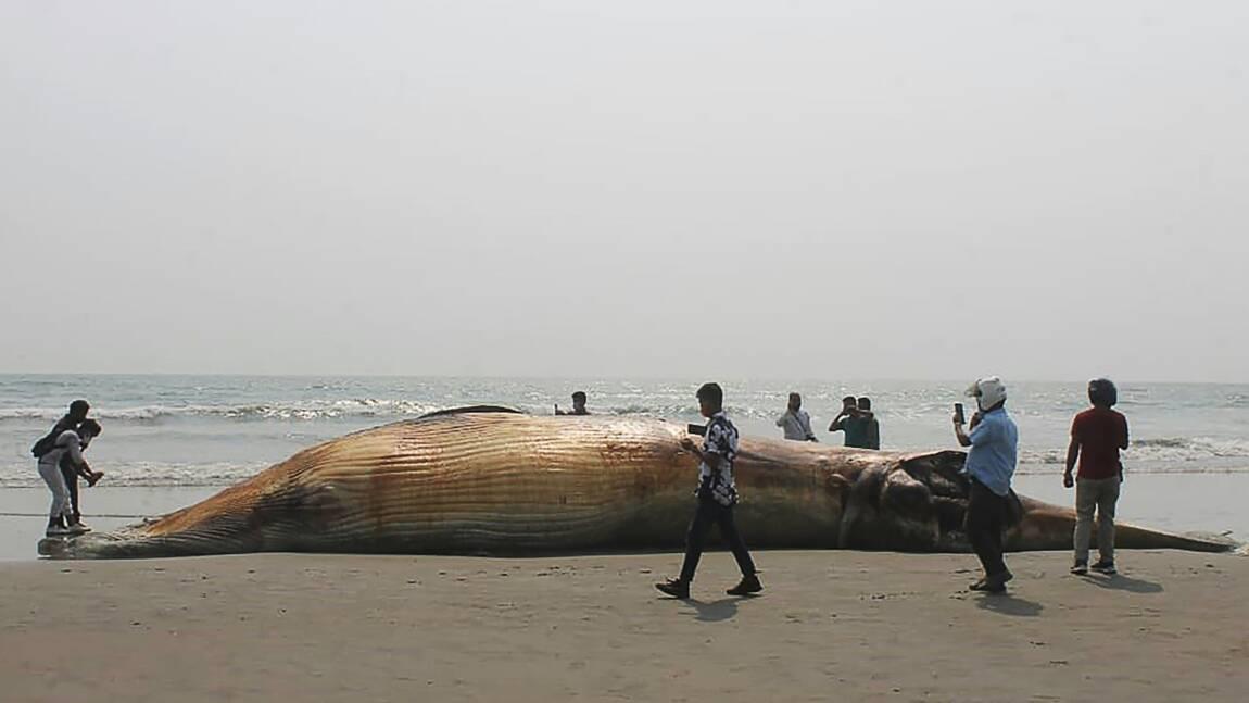 Les cadavres de deux baleines échoués sur une plage au Bangladesh