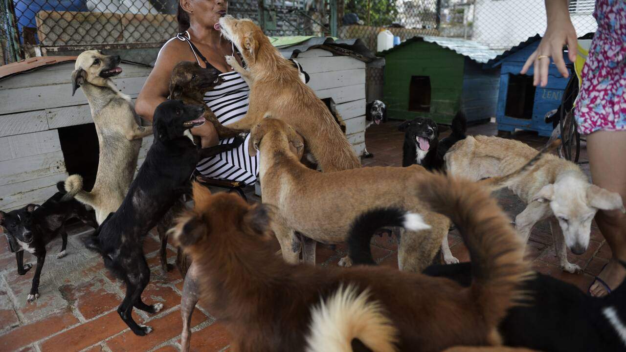A Cuba, une loi sur le bien-être animal, bienvenue mais encore incomplète