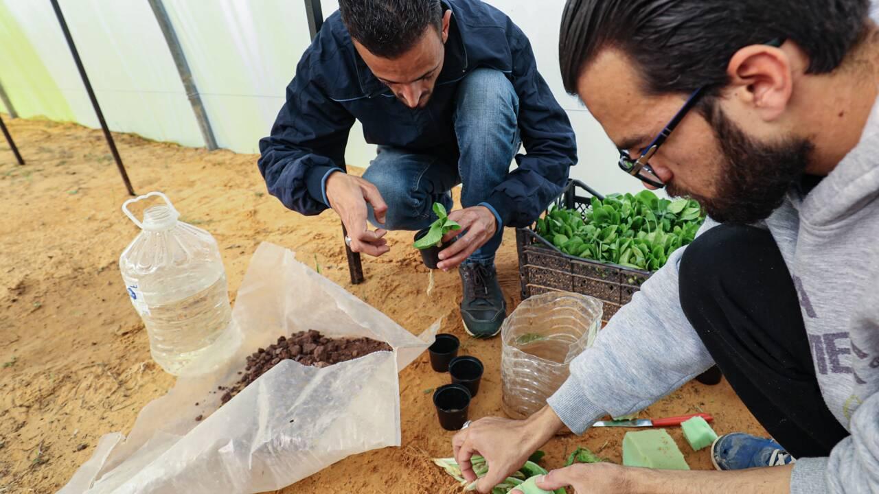 """Un """"Paradis vert"""" tente d'introduire l'agriculture hydroponique en Libye"""